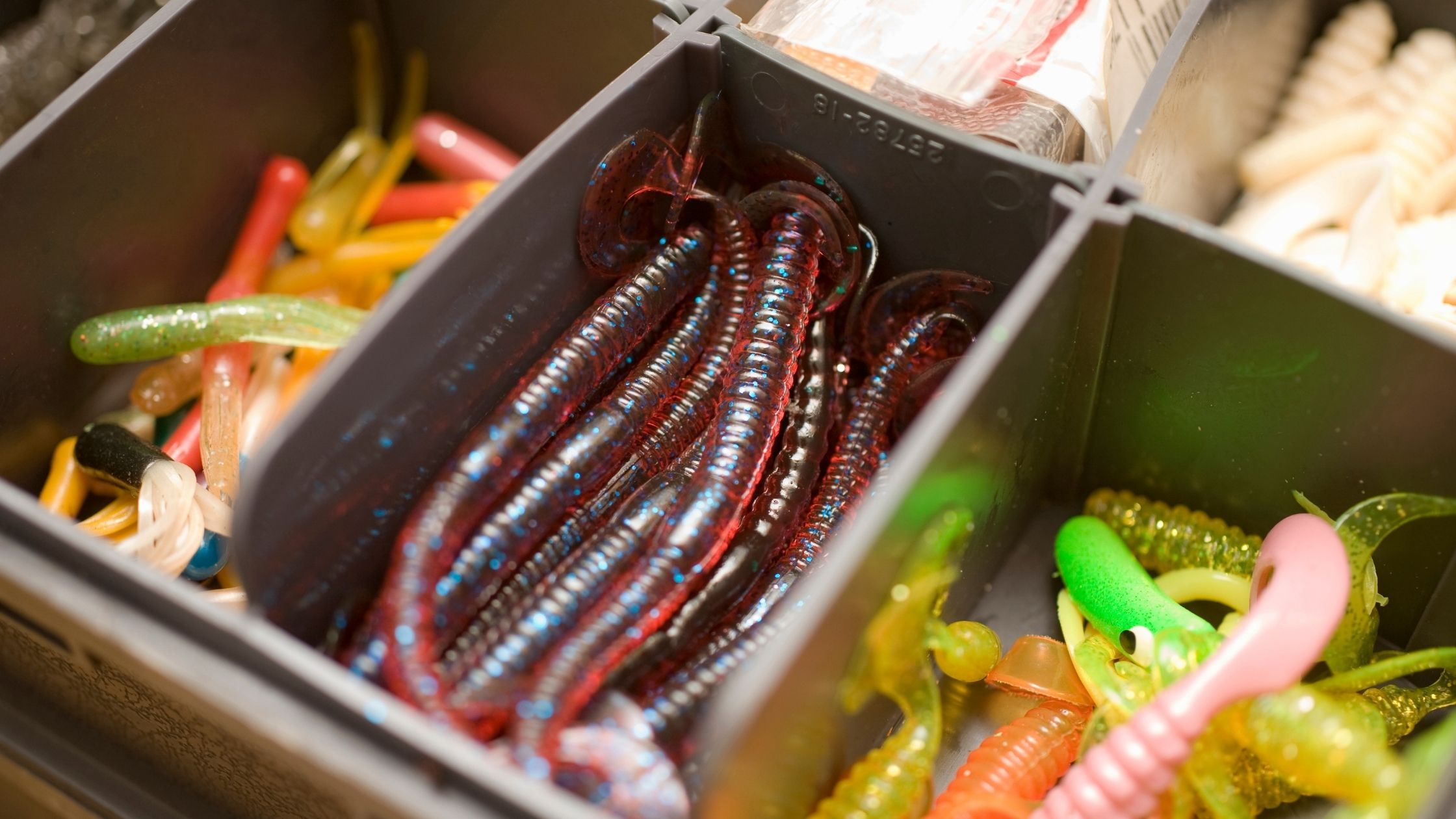 Types of Fishing Worms